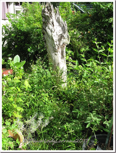 10-21-secret-garden