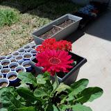 Gardening 2010 - 101_0632.JPG