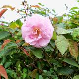 Gardening 2014 - 116_1279.JPG