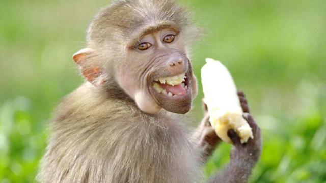 Nụ cười của khỉ - Tác giả: Goran Anastasovski.