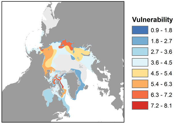 This map shows the September ranges of all Arctic marine mammal species. Red represents areas where mammal populations are highly vulnerable to ship traffic, while blue indicates areas of low vulnerability. Mammal ranges that don't overlap with sea routes are shown in light gray. Graphic: Donna Hauser