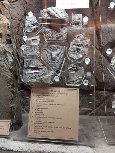 Trilobites! Newfoundland and Labrador History Comes Alive at The Rooms