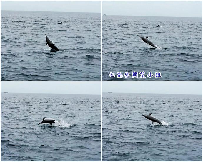 14 華棋168號賞鯨之旅