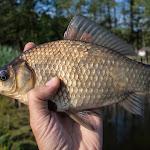 20150613_Fishing_Virlia_013.jpg