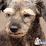 DIVULGUE VIDEOS  PESSOAS ANIMAIS DESAPARECIDOS's profile photo