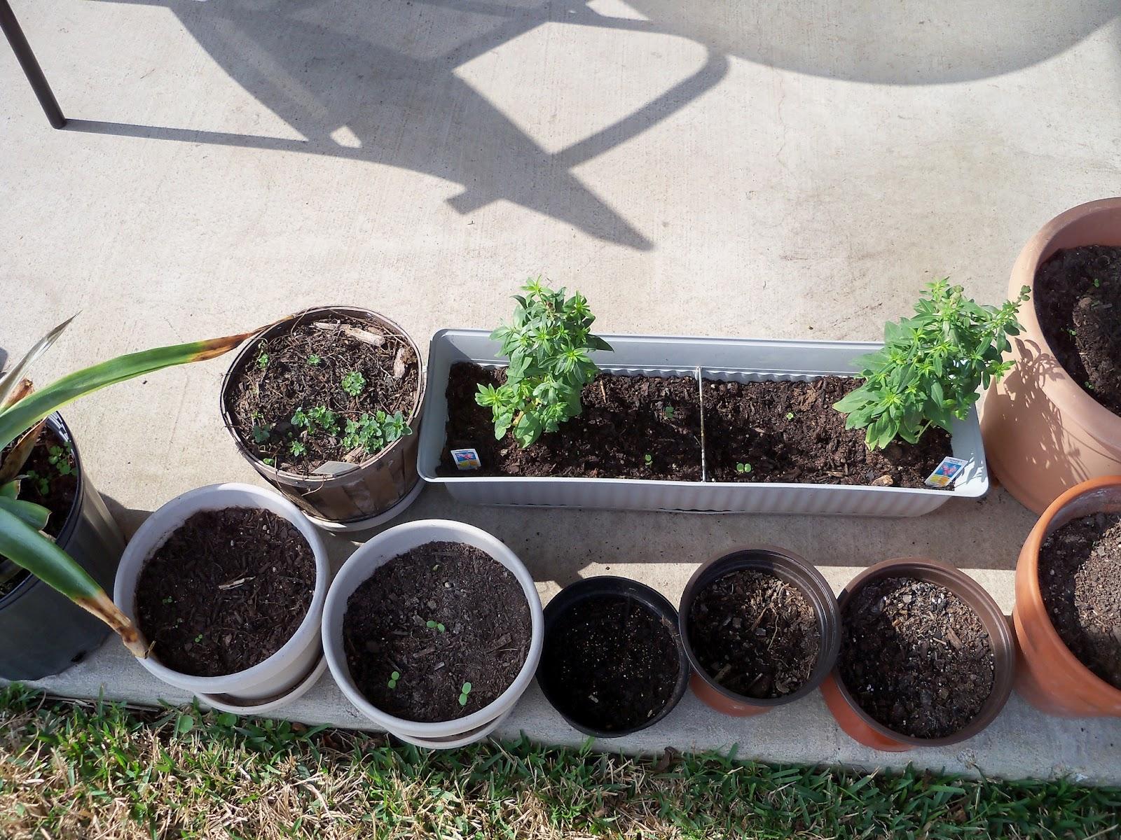 Gardening 2011 - 100_6644.JPG