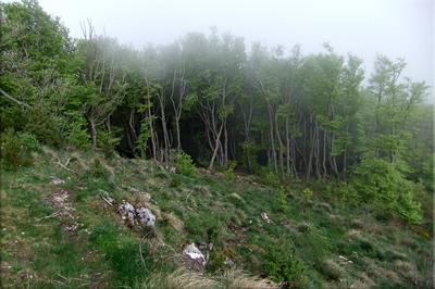 Cerrado bosque en el collado