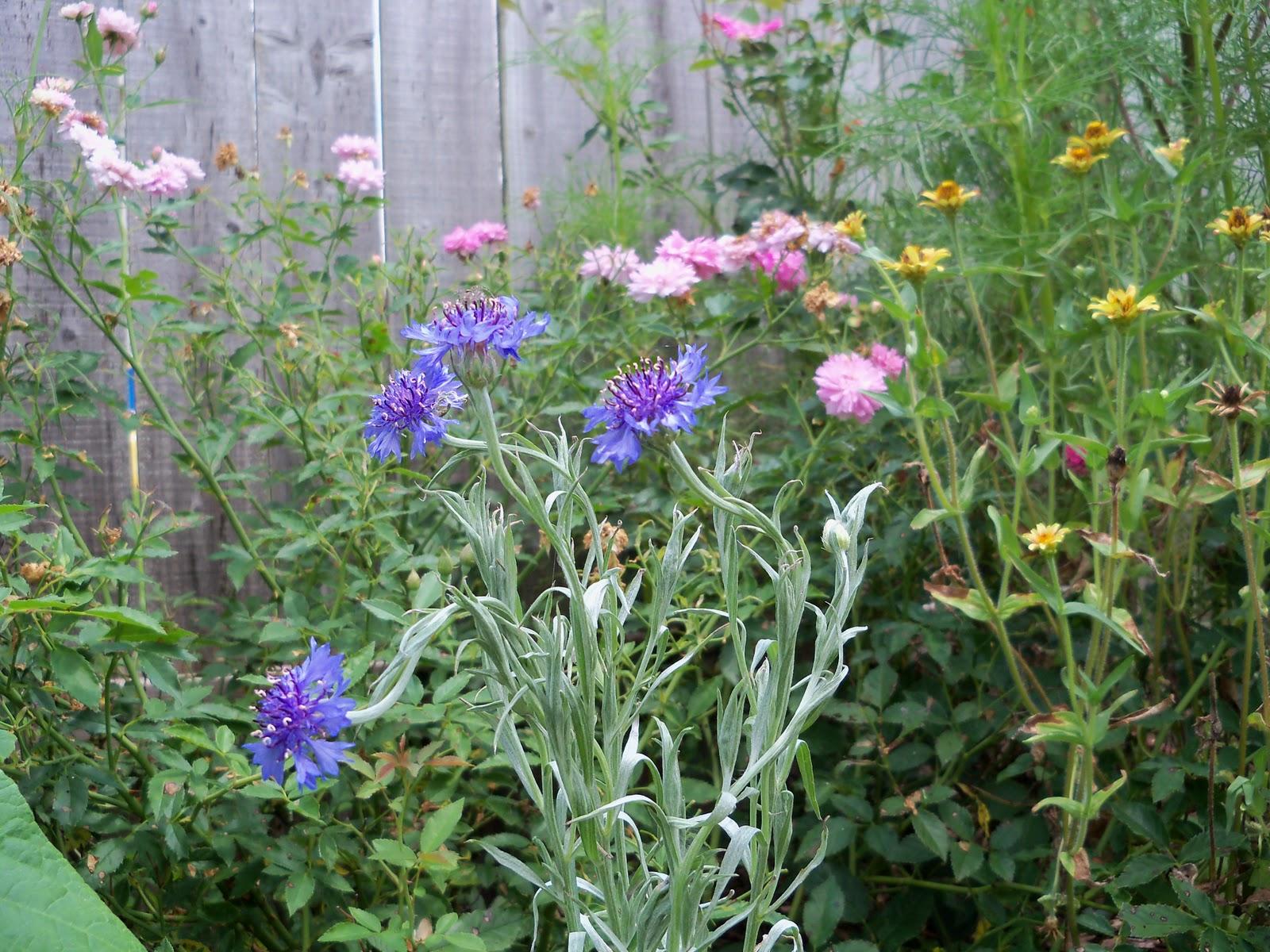 Gardening 2010, Part Three - 101_4832.JPG