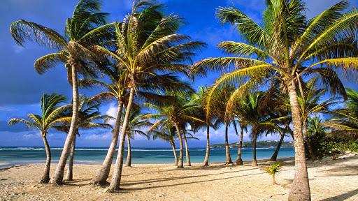La Caravelle Beach. Grande Terre Island, Guadeloupe, West Indies.jpg