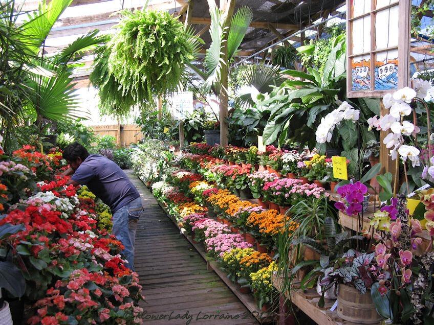 [05-08-flowers1%5B4%5D]