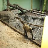 Zoo Snooze 2015 - IMG_7292.JPG