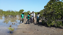 SPACES team identifying mangrove associates at Olumbe