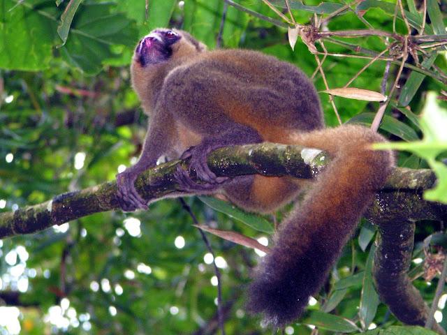 صور من مدغشقر Madagascar 14867590939