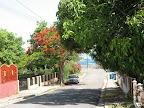 Acacia Street in Esperanza