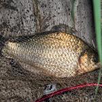 20140805_Fishing_Bochanytsia_014.jpg
