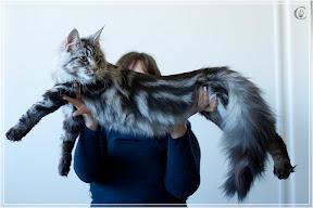 cats-show-25-03-2012-fife-spb-www.coonplanet.ru-033.jpg