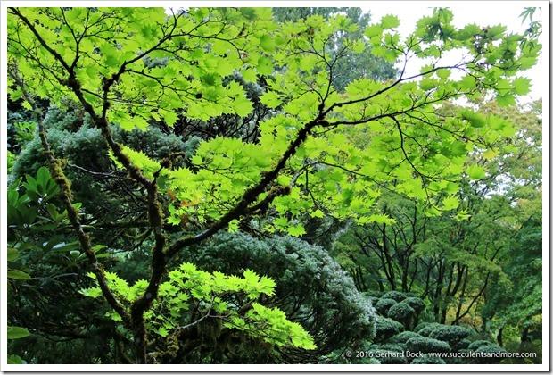 160906_Butchart_Gardens_0118