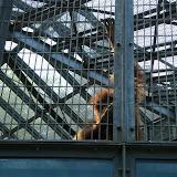 01.05.2011 Ausflug Neunkircher Zoo p2