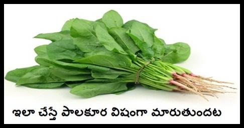 Spinach you should never reheat - Vaish Recipes