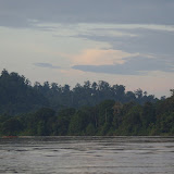 Sur la Kinabatangan en aval de Sukau, 15 août 2011. Photo : J.-M. Gayman