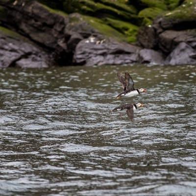 Scottish seabird center boat ride