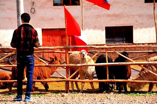 聖なる谷で出会った動物たち