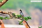 migrating birds in Vasai | Mumbai