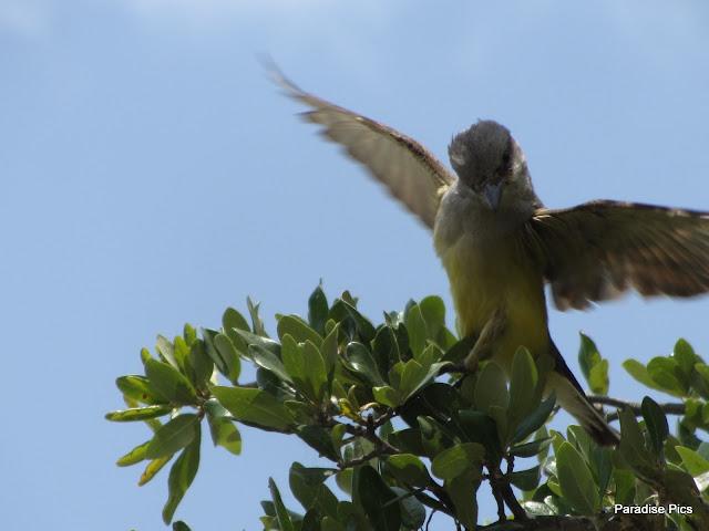 BirdAtLuby%2527s.jpg