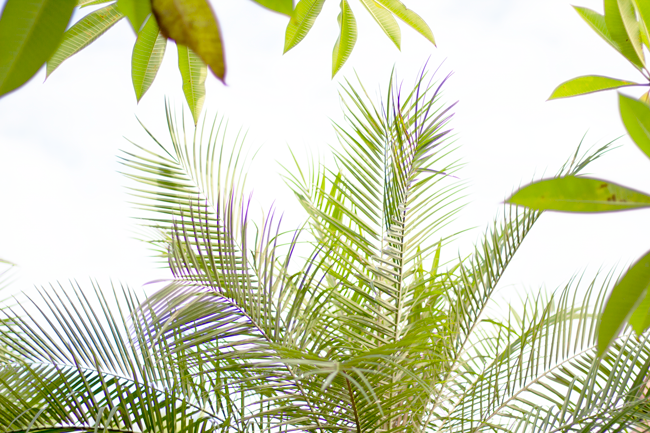 Tropical palm fronds | Lavender & Twill