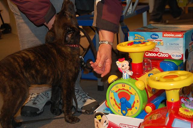 KNON pups in de stad 09-2011 - DSC_0061.JPG