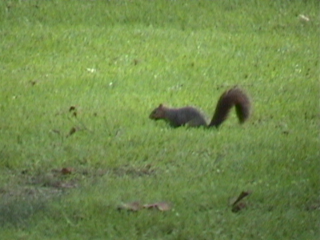 1490Squirell