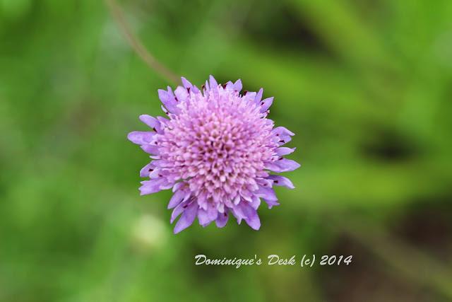 Mini Purple Bloom