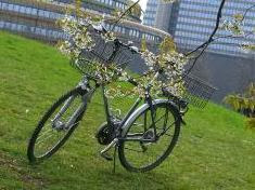 Foto Special: Diamant-Bike