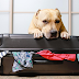 Tips for caring about your Pet While on a Long Distance Move