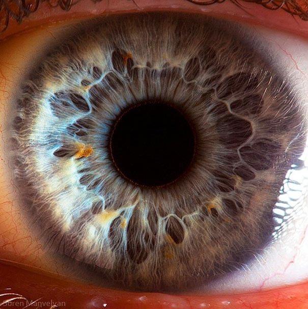 human eyes 1 (8)