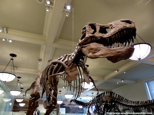 dinosaurio-museo-historia-natural-nueva-york.JPG