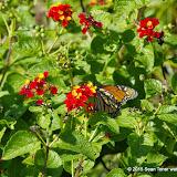10-26-14 Dallas Arboretum - _IGP4332.JPG