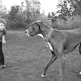The Dynamite Danes Family! - Here_Doggy_Doggy.jpg