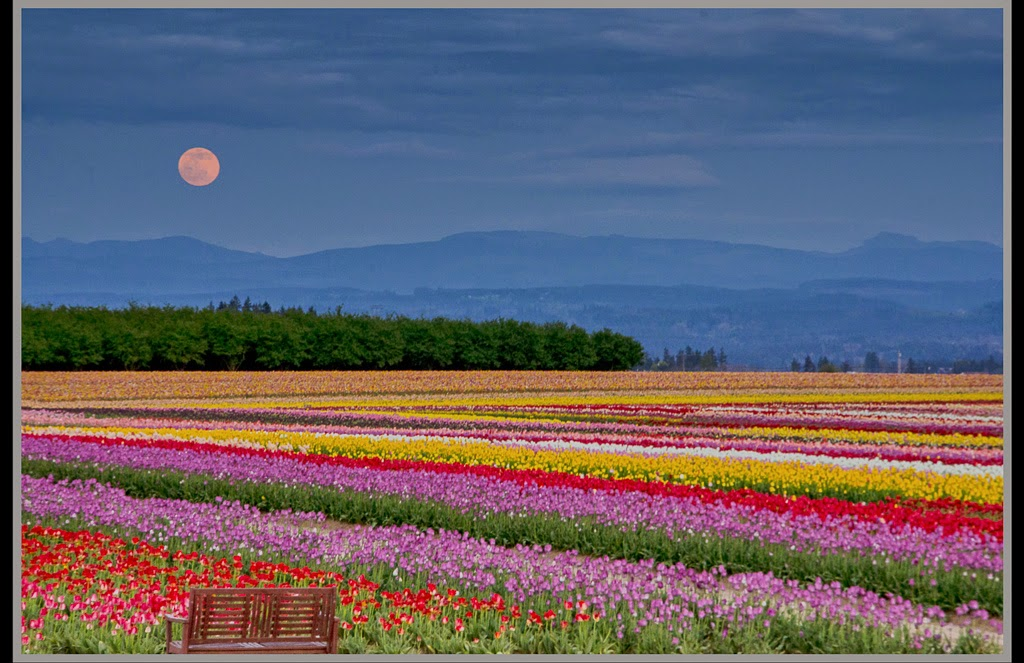 """""""Moon over Tulip Sea"""" by Valerie Henschel -- 2nd place A General"""