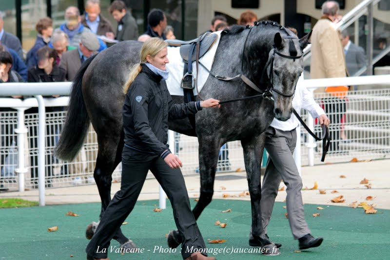 Photos Auteuil 2-11-2014 (48h de l'obstacle) IMG_5177