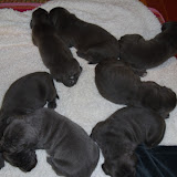 Sofia's litter @ 2 weeks