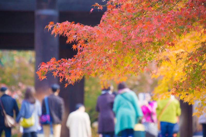 京都 南禅寺 紅葉 写真2