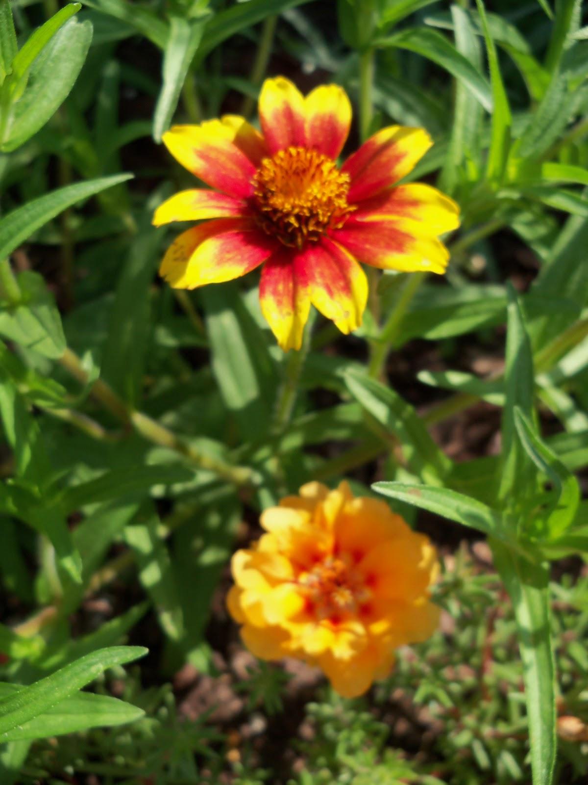 Gardening 2010, Part Two - 101_2588.JPG