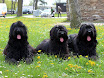 BonnieLilyCheri015 - Copy.JPG