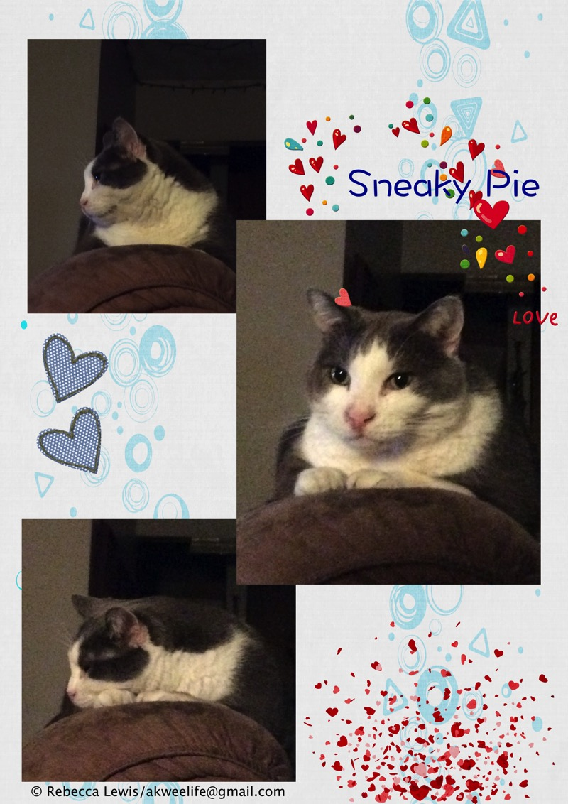 Sneaky Pie 2016 Jul 31
