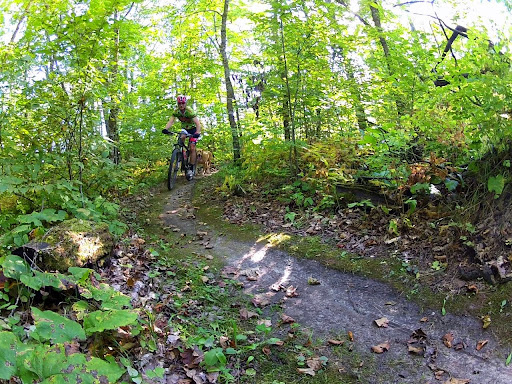 Scattered leaves on the singletrack