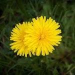 Spring (13 of 25).jpg