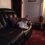 Brodie - Rehomed UK