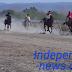 137 Ekor Kuda Ramaikan Pacuan Kuda Piala Dekan Fakultas Peternakan Undana