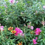 Gardening 2011 - 100_8171.JPG
